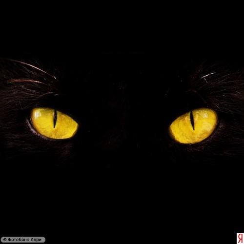 Хэллоуин. Глаза в темноте.