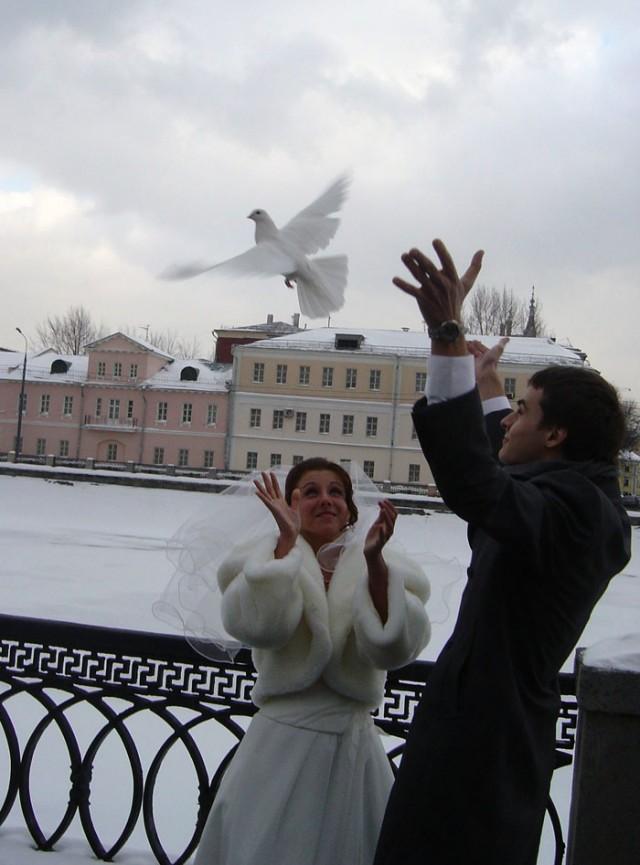 Запуск голубей. Любовь и голуби.